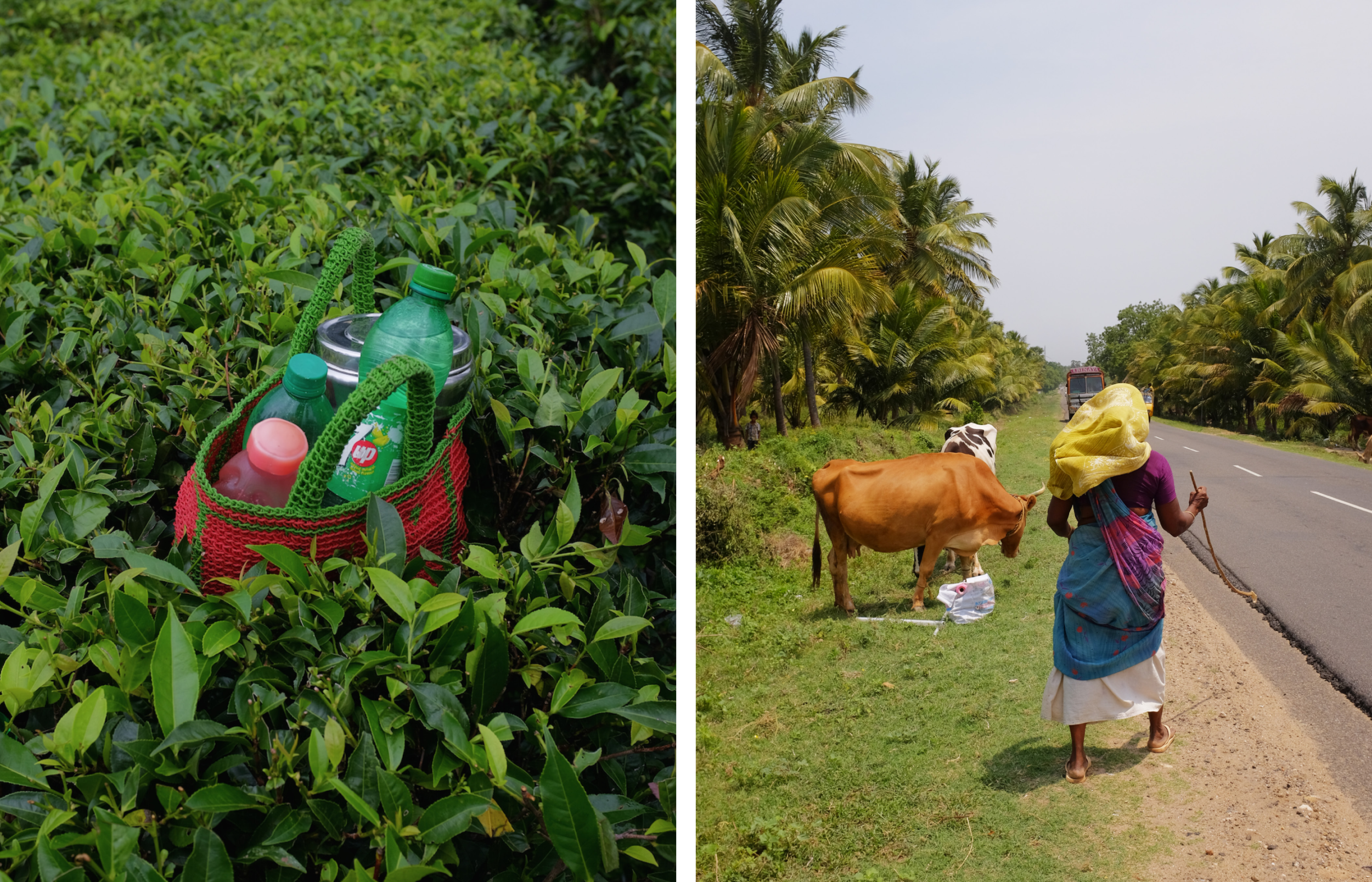Kerala, India and tea plantation photography for Curry Cafe website